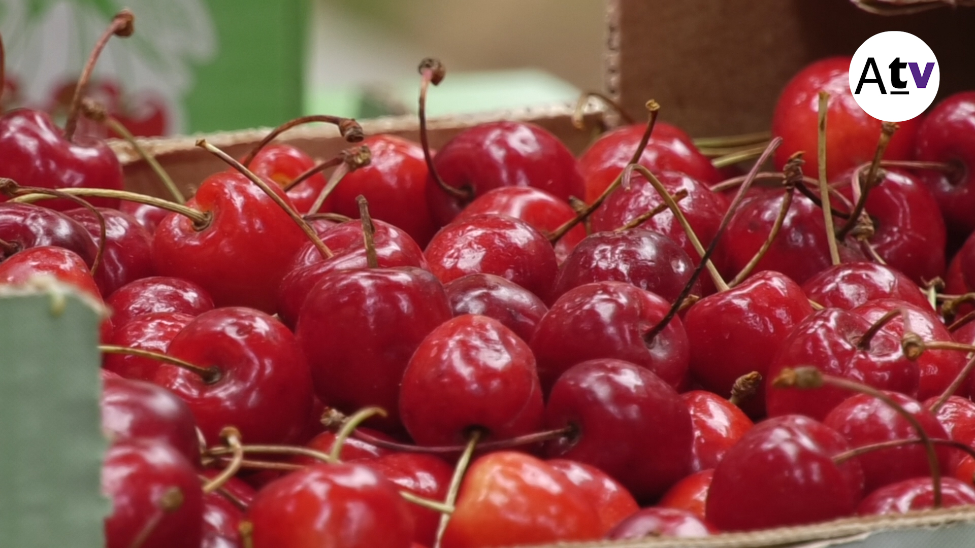 NOU REPORTATGE: Torna la Fira de la Cirera, però amb menys productors