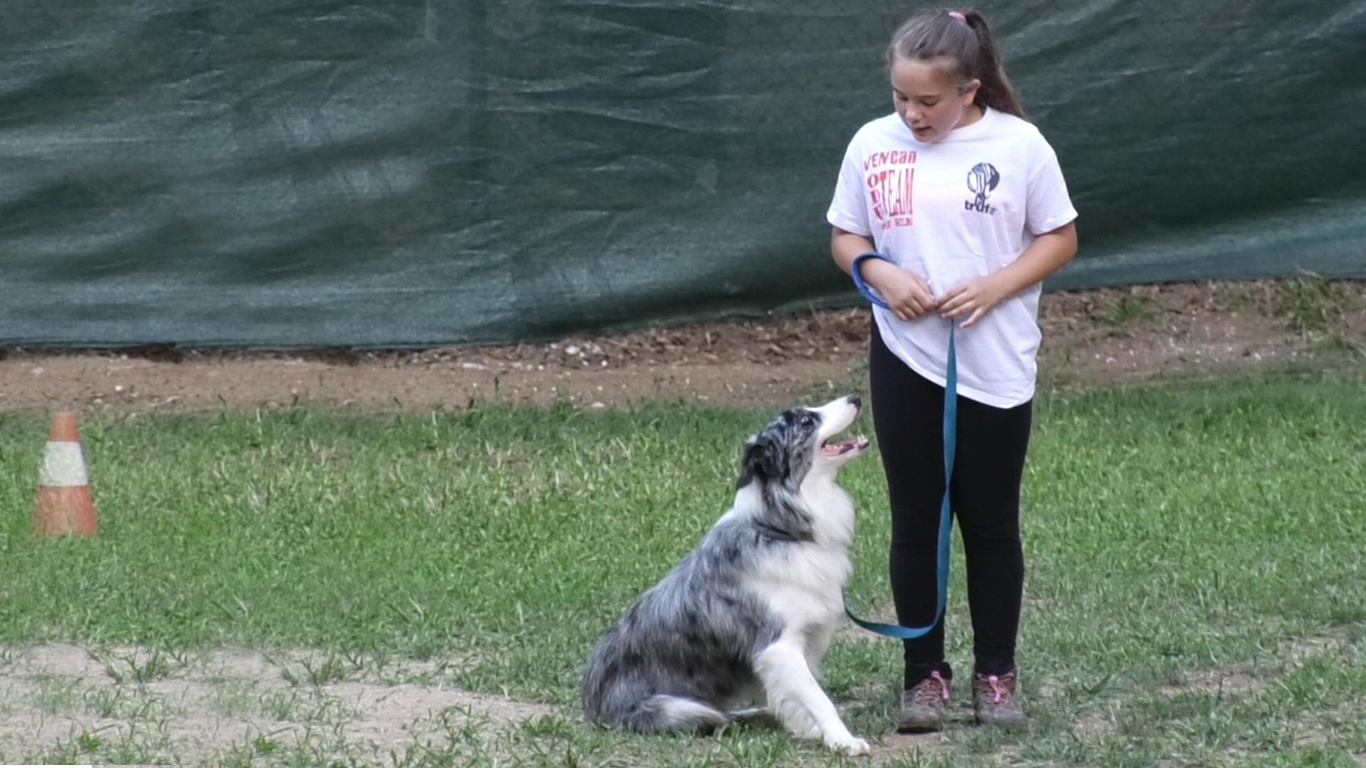 NOU REPORTATGE: Concurs d'obediència canina al Club Vencan d'Arenys de Munt