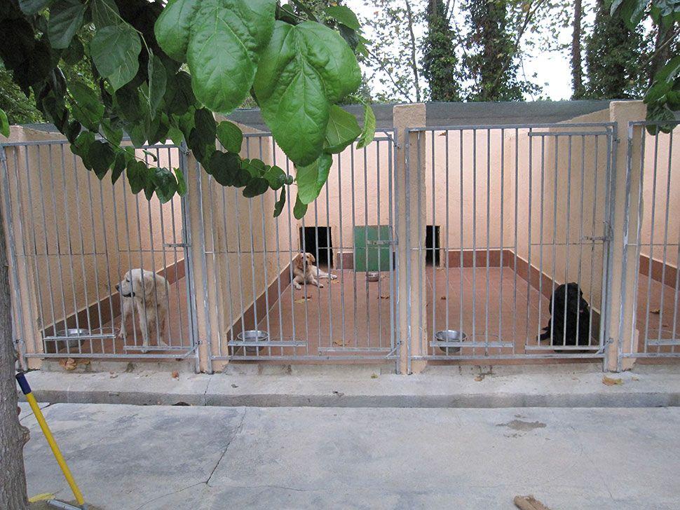 Es recullen 15 gossos pel carrer el darrer any, i s'han esterilitzat 26 gats per controlar-ne la població
