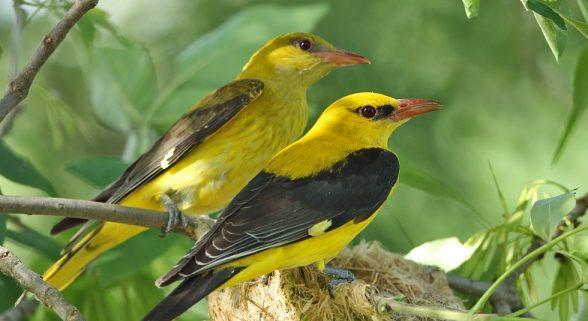 Diumenge es fa una descoberta dels ocells que viuen al Parc de Can Jalpí